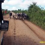 Vägen till Masai Mara