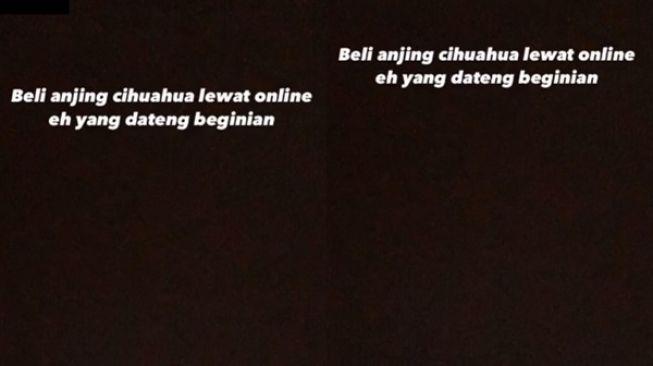 Viral Beli Anjing Cihuahua Lewat Online. (TikTok/@al*****o3)