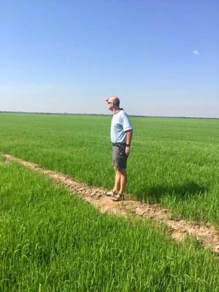 Mitt risfält!