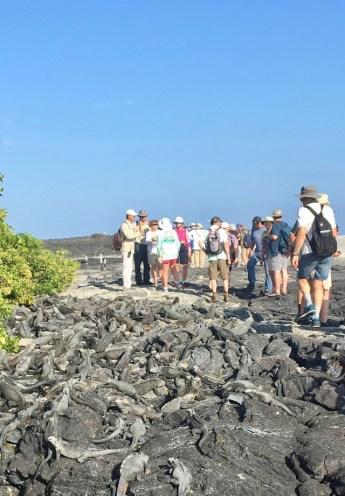 Marine iguanas och svenskar