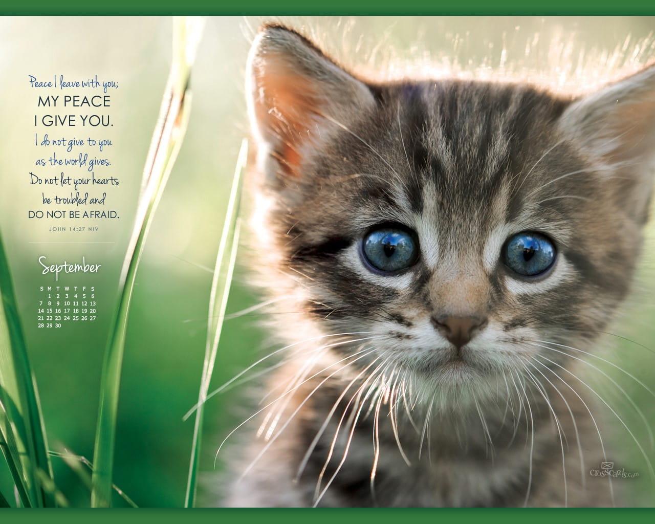 Fall Kittens Wallpaper Sept 2014 John 14 27 Niv Desktop Calendar Free