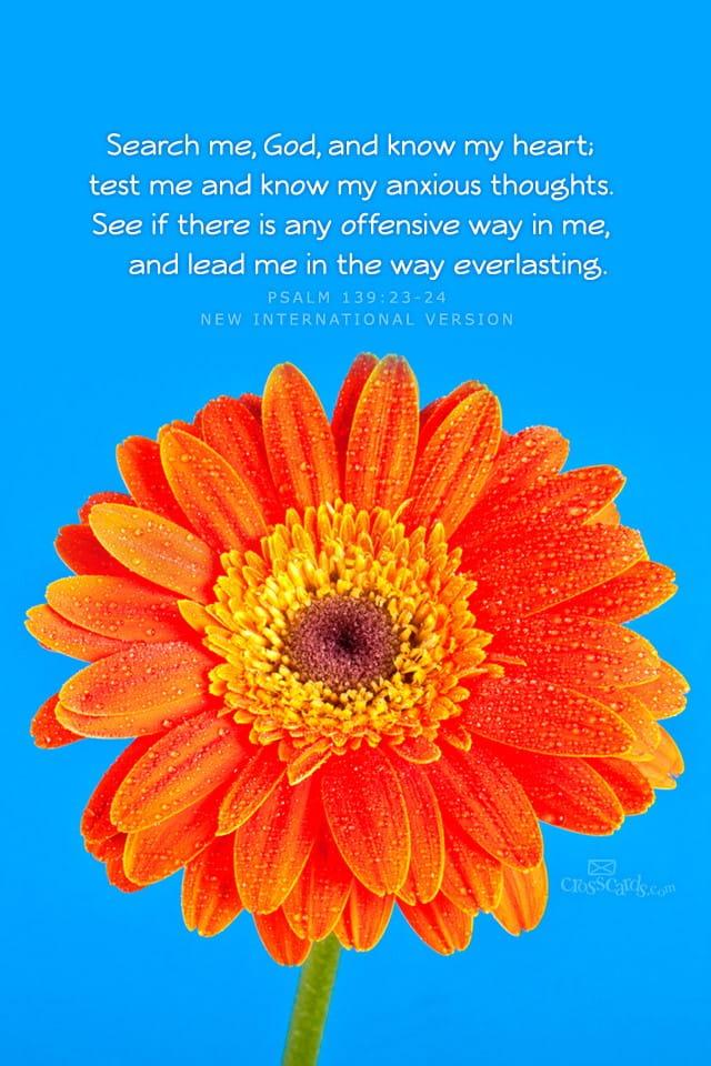 Free Fall Flower Desktop Wallpaper Psalm 138 23 24 Niv Bible Verses And Scripture Wallpaper
