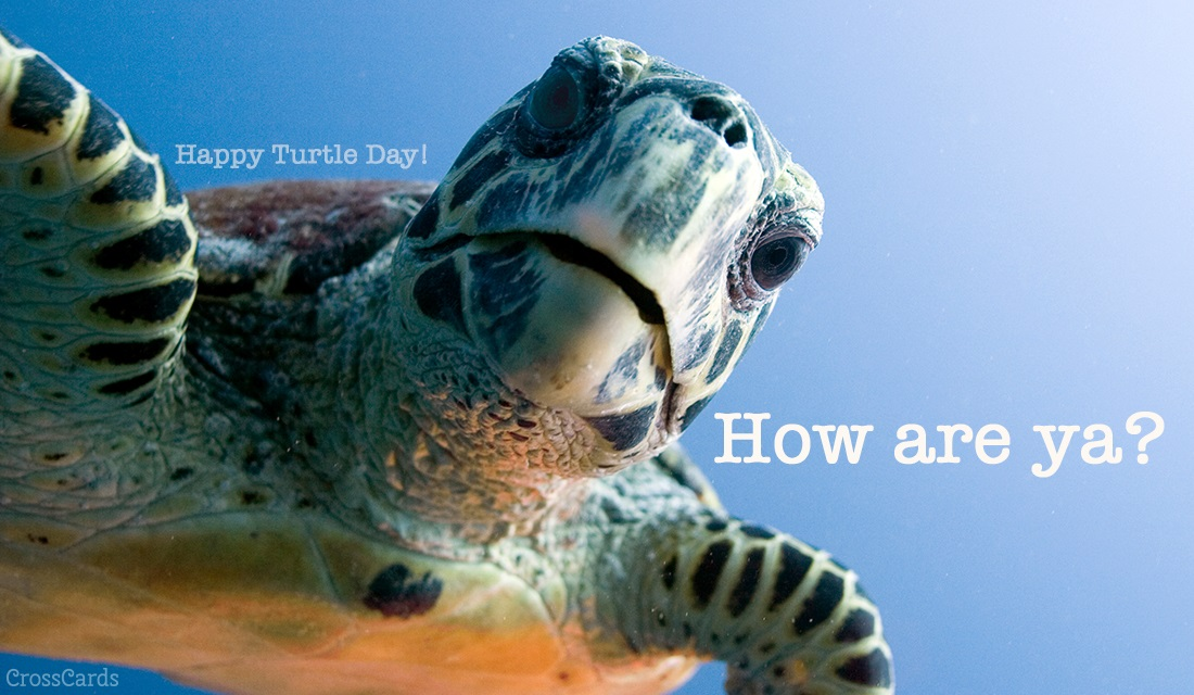 Fall Scripture Wallpaper Free Happy Turtle Day 5 23 Ecard Email Free