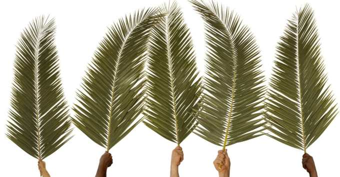 What is Palm Sunday? - 5 Historical Truths for Today
