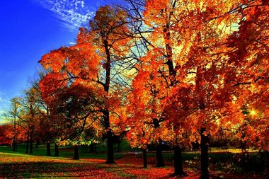 New York Fall Wallpaper Best Of Fall Photo Contest Syracuse Com