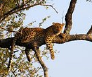 15% sparen 15-Day South African Highlights Small Group Tour from Johannesburg to Cape Town – Johannesburg