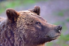 2-Day Yellowstone and Grand Teton National Parks Wildlife Adventure