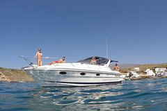 Luxury motor boat cruise with whale and dolphin watching