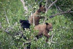 Take a Private Day Tour of Grand Teton National Park