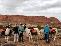 Guided Hiking Adventure with llamas in Capitol Reef
