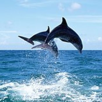 St Johns County FL Dolphin Adventures in St. Augustine 144896P5