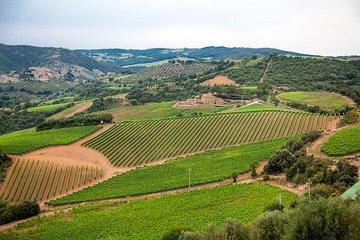 The Complete Wine Tour Brunello, Nobile, Chianti wine experience