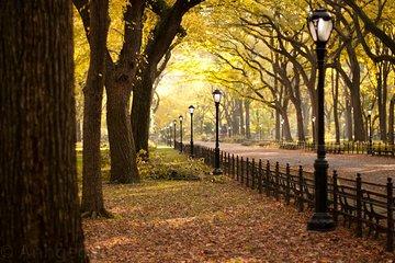 Sunset Tour of Central Park