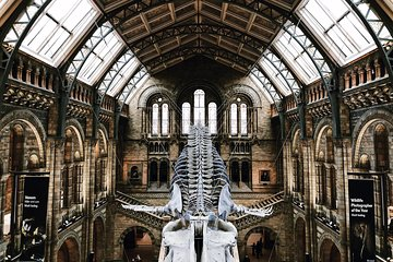 Skip-the-line Natural History Museum of London Guided Tour - Private Tour