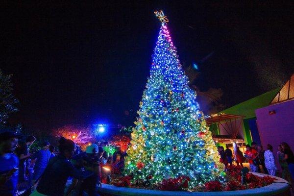 christmas lights miami # 81