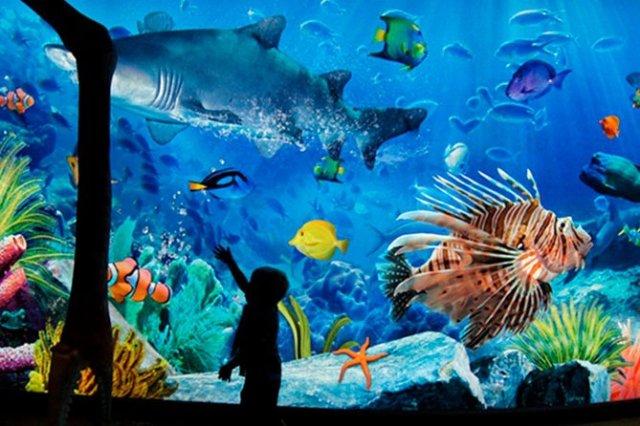 Image result for 4. SEA LIFE Bangkok Ocean World