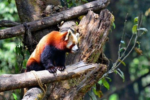 Padmaja Naidu Himalayan Zoological Park Kolkata Tickets & Tours - Book Now