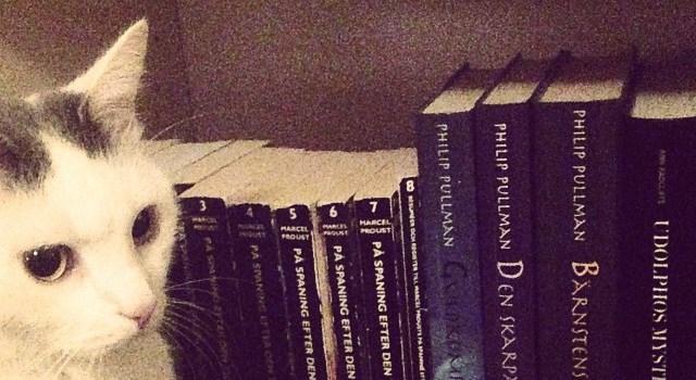 Katter, poesi med mera – 3 bokbilder