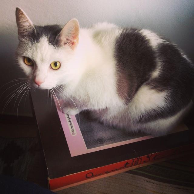"""Instagram media by litteraturmagazinet - Katten Ibids åsikt om Strindbergs ockulta dagbok: """"Äntligen en bok i rätt storlek!"""" #katt #klassiker #strindberg / #seb_lm"""