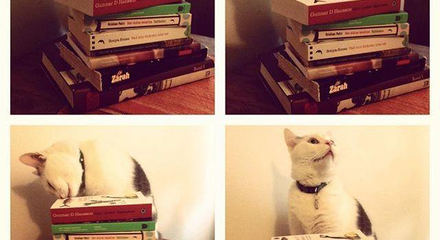 Katt och bokhög