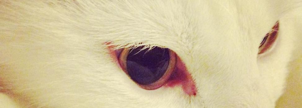 Kattbilder (och en hund!)