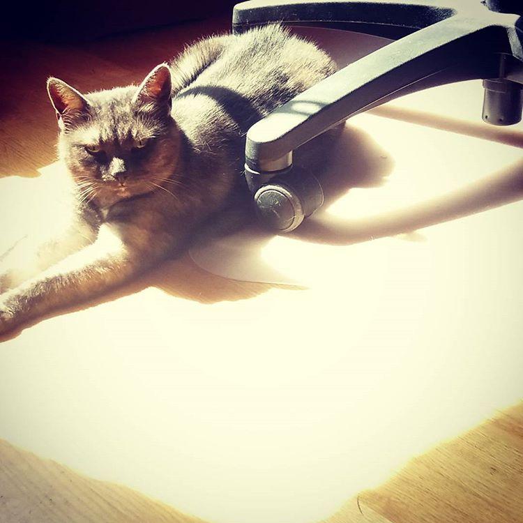 När skygga Miso solar och jag zoomar in till max fastnar även hon på bild. Annars är hon skeptiskt till kameror #katter #kattliv #skyggis