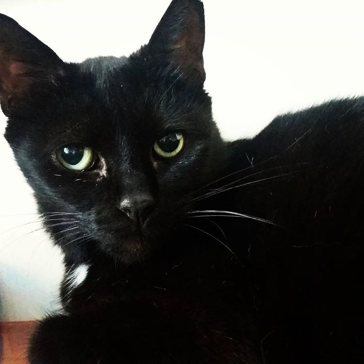 Glad midsommar hälsar Tom, en cirka 14-årig, före detta hemlös herre som vi haft äran att husera de senaste fem åren #katt #kattliv #hemlösakatter #katthem