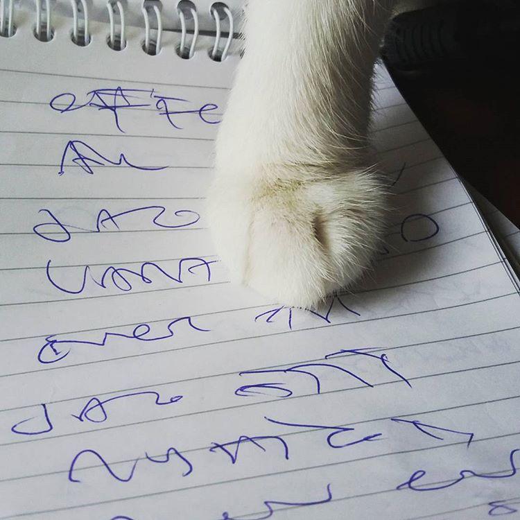 Ibid hjälper mig att tyda min slarviga handstil #sekreterarkatt #katter #skrivande #läkarhandstil