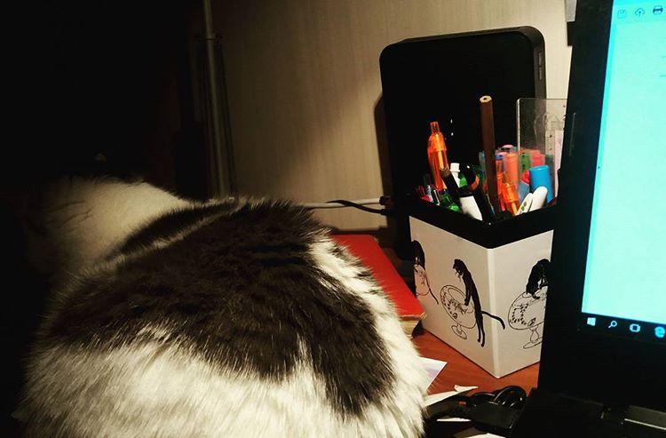 Skrivbordssällskap ❤ #katter #skrivande #skrivbord
