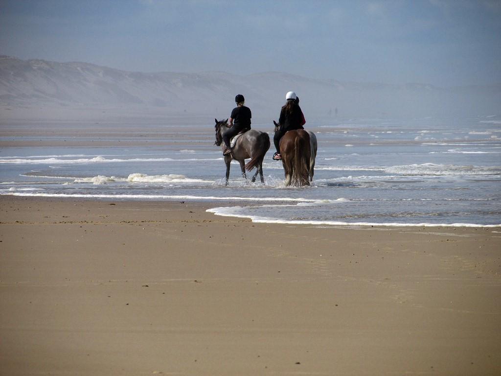 tohapi balade equestre