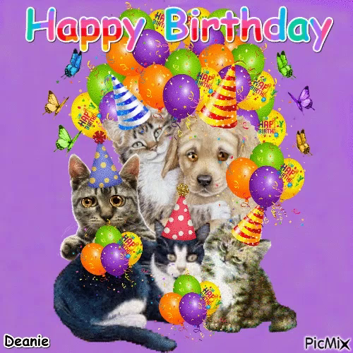 happy birthday animals gifs