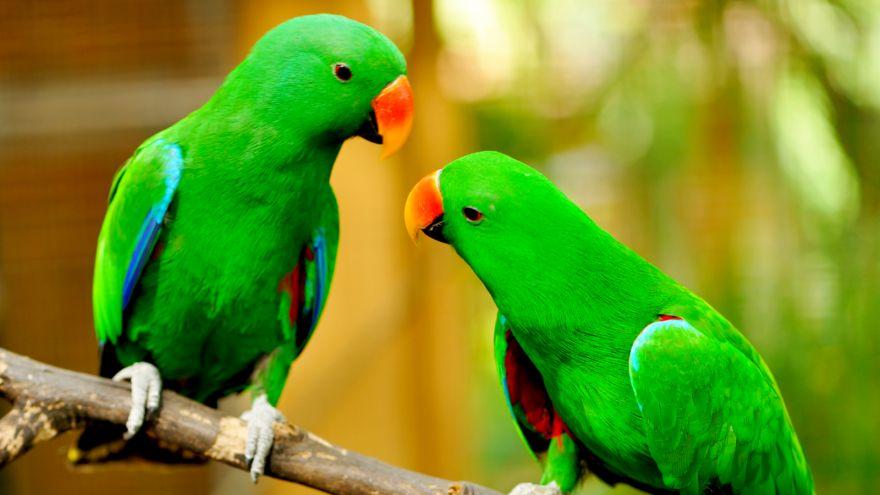 the smartest birds to