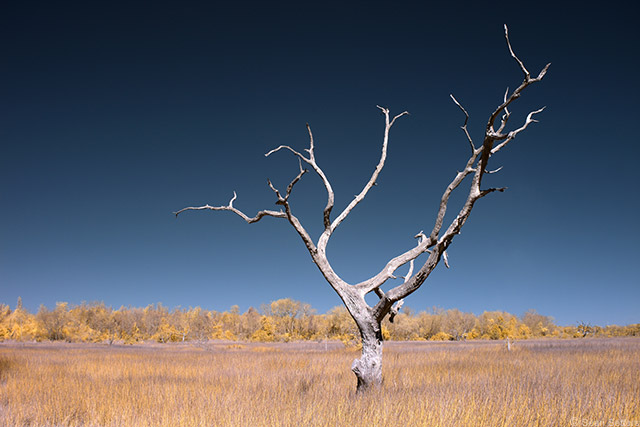 Isolated Tree in IR