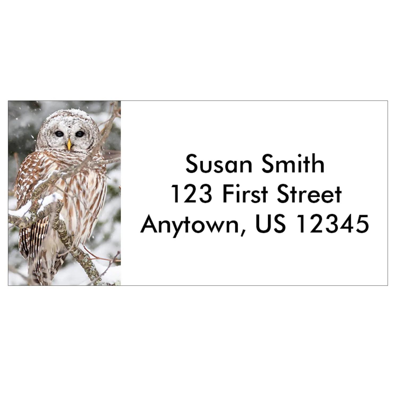 snowy barred owl address