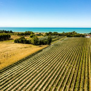 Top wineries of New Zealand 2021: 8 to 5