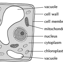 Easy Diagram Of Plant Cell Vw Polo 9n Radio Wiring Tuition Fees Are So Progressive We Should Start Charging