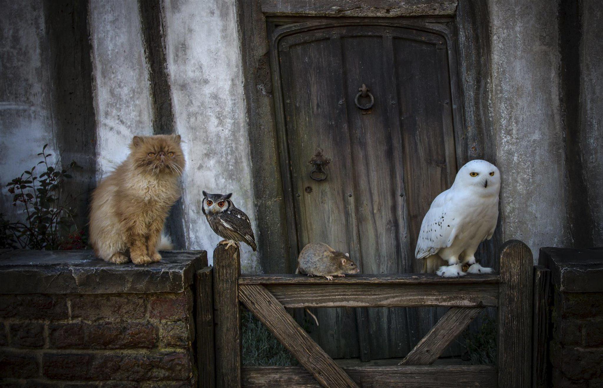 Lgbt Wallpaper Cute Animal Week At The Warner Bros Studio Tour The Making Of