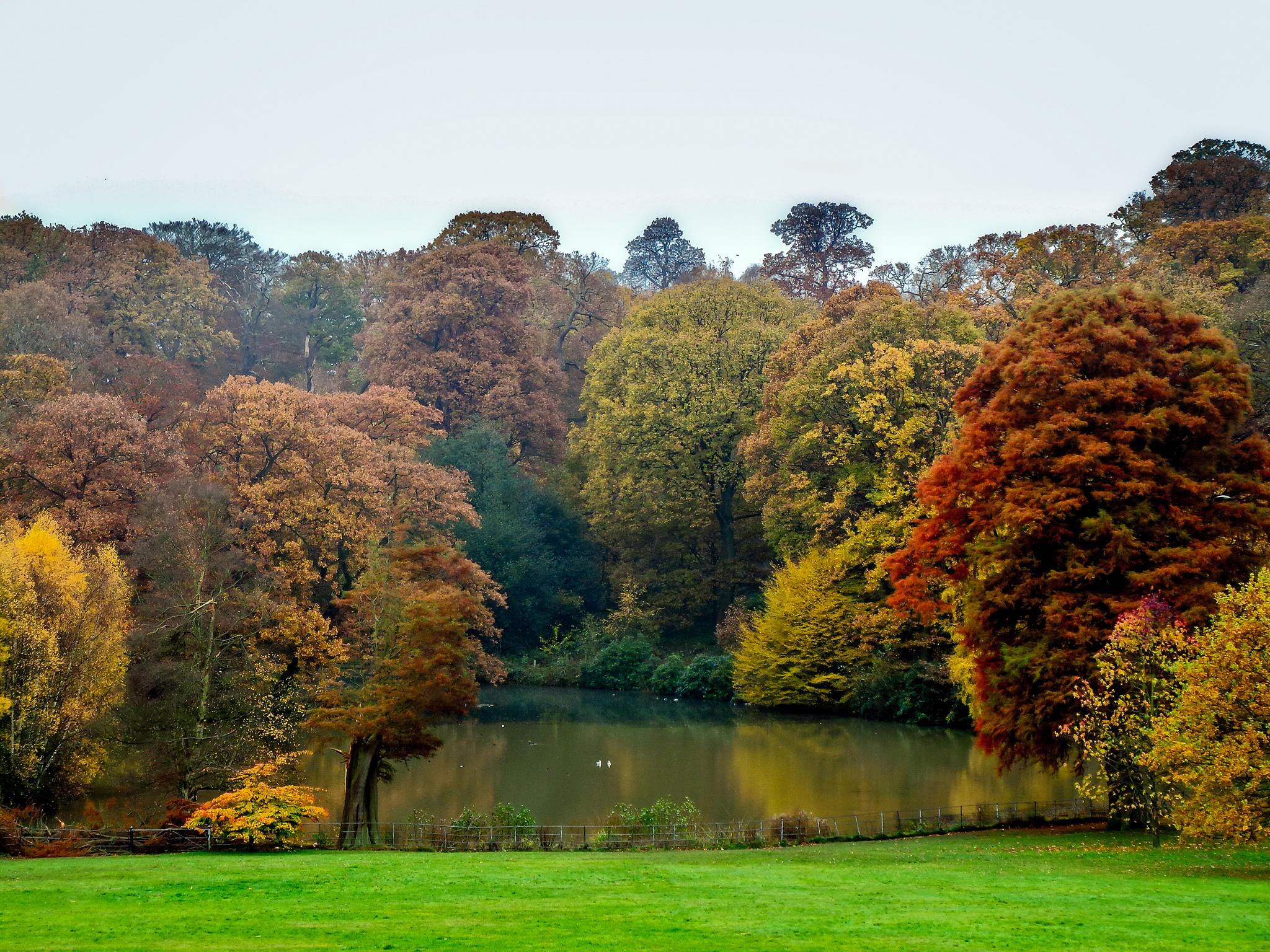 New England Fall Desktop Wallpaper Five Great Autumn Park And Pub Walks In London