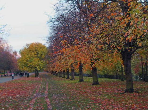 Victoria Park, Autumn