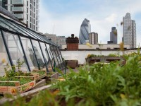 Culpeper Roof Garden | Bars and pubs in Whitechapel, London