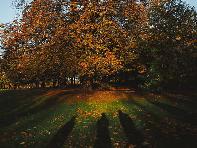 Shadows in the grass in Greenwich Park, autumn.