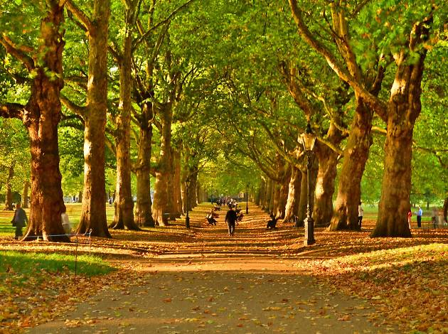 Fall Leaves Pathway Computer Wallpaper 32 Cosy Photos Of Autumn In London