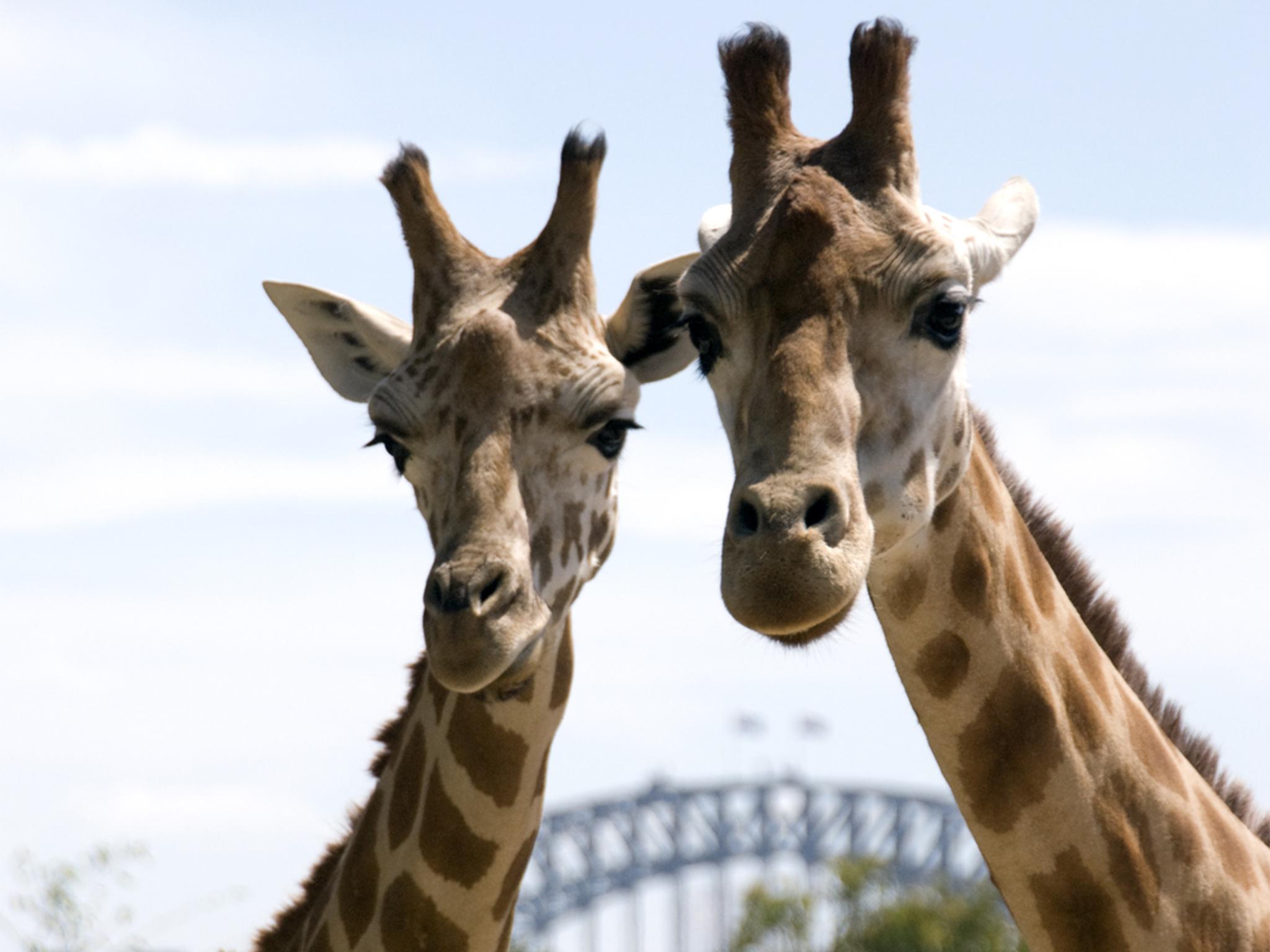 Activities For Kids In Sydney