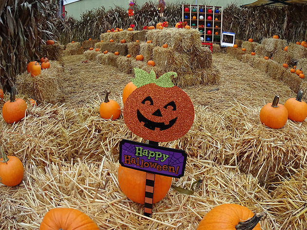 Fall Wallpaper With Pumpkins Halloween Harvest Things To Do In New York