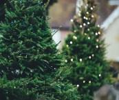 Best Christmas Trees Sydney