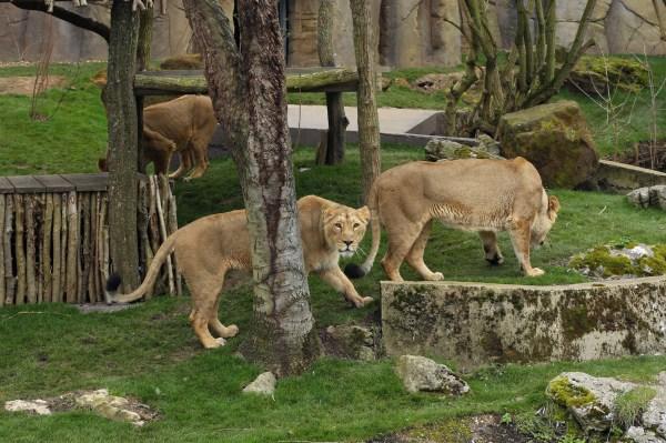 Top 5 Zsl London Zoo - Time Kids