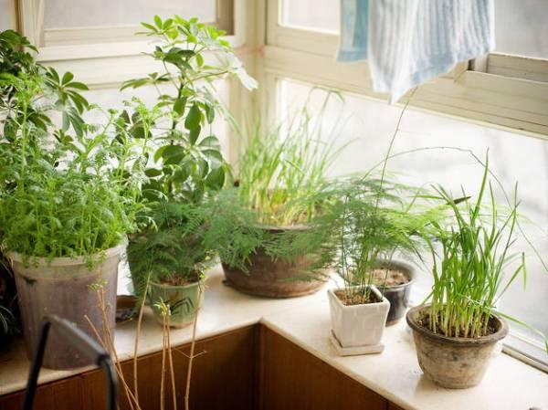 start indoor garden