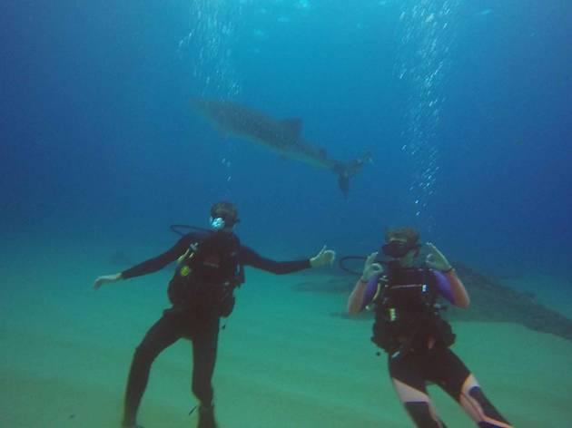 Whale Shark Snorkeling, eitw