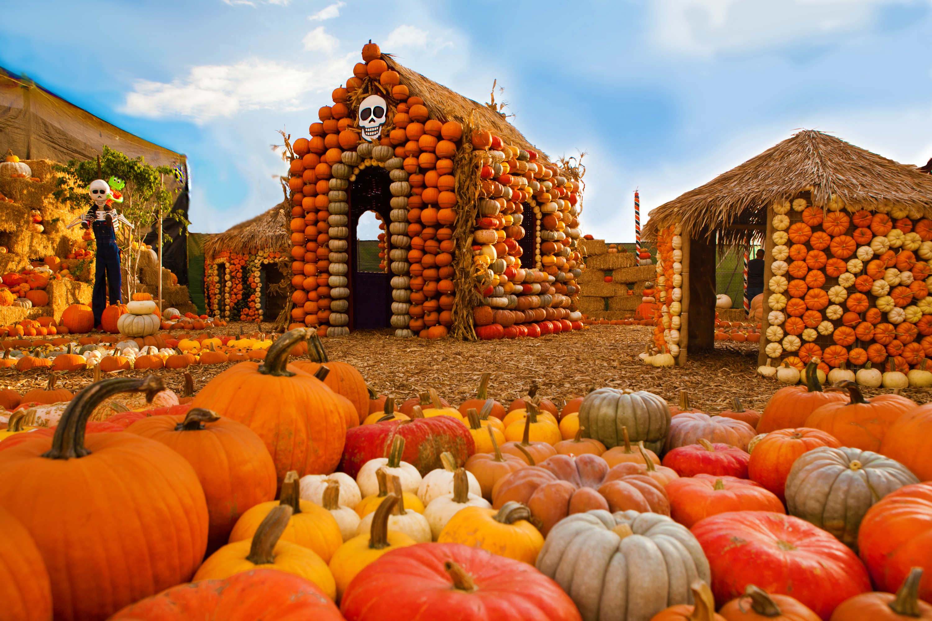 9 Best Pumpkin Patches In Los Angeles For Halloween Fun