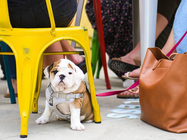 34 dog friendly patios restaurants and